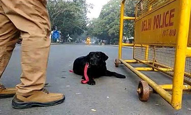 delhi-police@